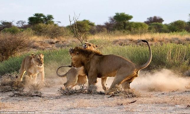 Sư tử cái ghen tuông, trút cơn thịnh nộ lên bạn tình - ảnh 2