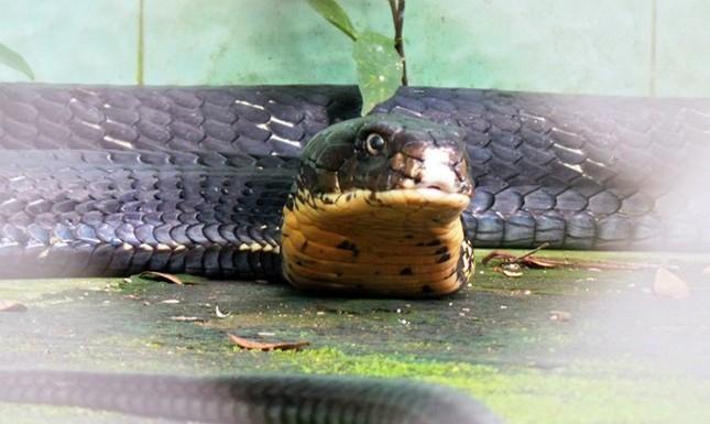 Khám phá bảo tàng rắn lớn nhất Đông Nam Á ở Tiền Giang - ảnh 1