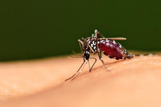 Vì sao không diệt hết loài muỗi để chúng không truyền bệnh? - ảnh 1