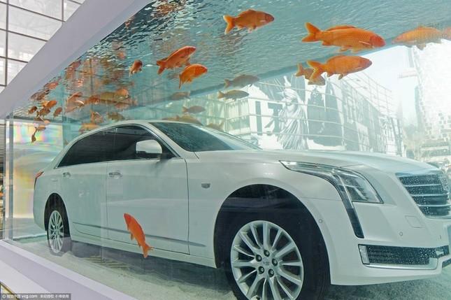 Cadillac CT6 'chịu chơi' ngâm mình trong bể cá - ảnh 1
