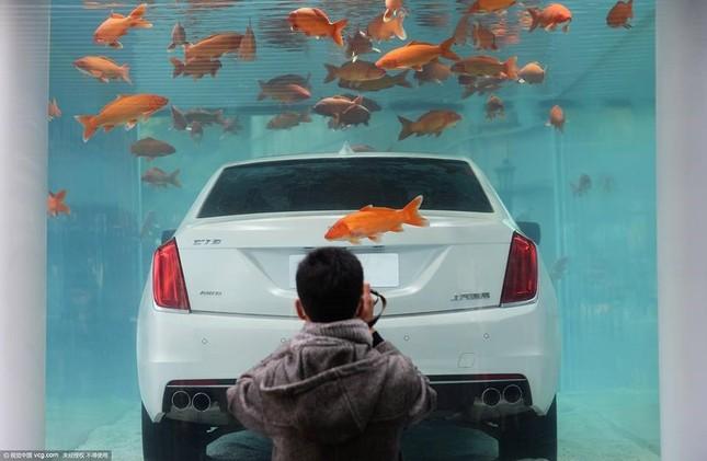 Cadillac CT6 'chịu chơi' ngâm mình trong bể cá - ảnh 3
