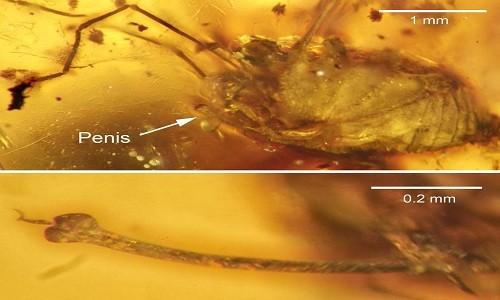 Phát hiện nhện 99 triệu năm tuổi trong tư thế giao phối - ảnh 1