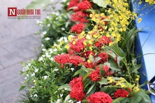 Đường hoa Nguyễn Huệ ngập tràn sắc xuân ngày khai hội - ảnh 13