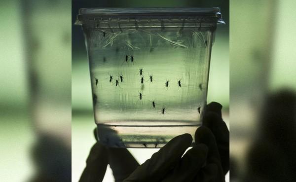 Ấn Độ bào chế vaccine chống virus Zika trước khi virus lan tràn - ảnh 1