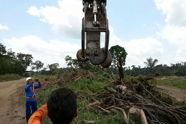 Con trăn lớn nhất hành tinh được phát hiện ở Brazil - ảnh 2