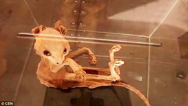 Xác ướp quái thú bí ẩn được tìm thấy ở Thổ Nhĩ Kỳ - ảnh 2