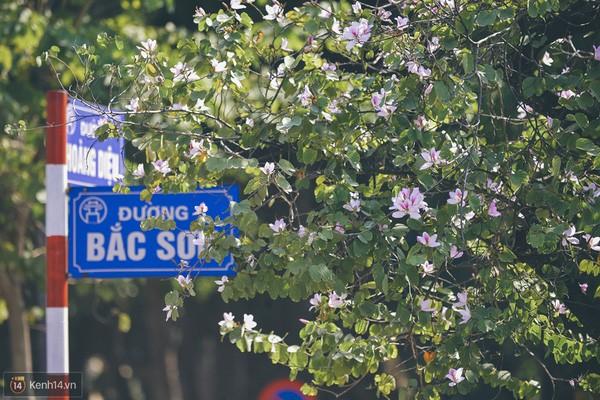 Ghé thăm những cung đường rực rỡ hoa ban giữa lòng Hà Nội - ảnh 2