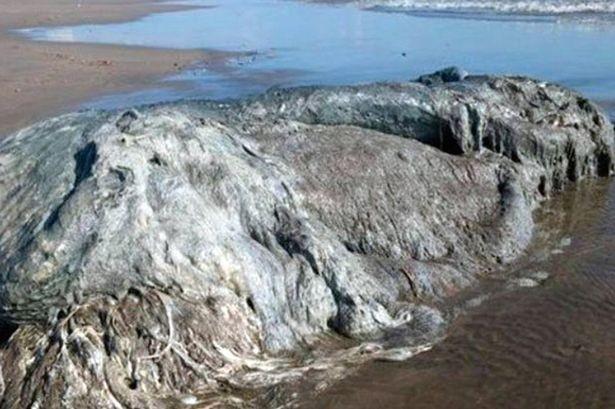 'Thủy quái' bí ẩn dài hơn 4m dạt vào bờ biển - ảnh 1