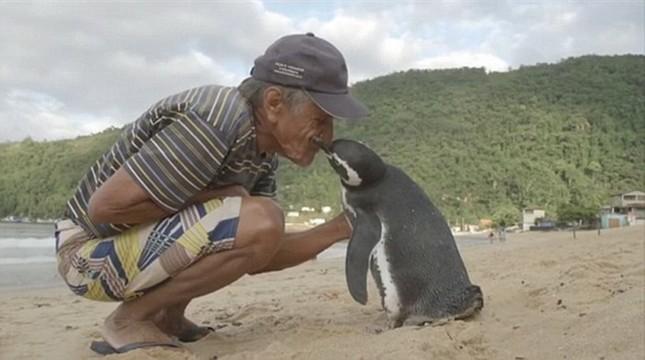 Chim cánh cụt mỗi năm vượt biển 8.000km về thăm ân nhân cứu mạng - ảnh 1