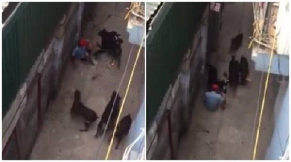 4 con chó tấn công 'chủ nhân': Cánh tay người đàn ông bị cắn nát - ảnh 1