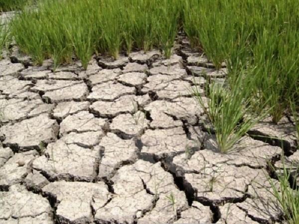 BIDV hỗ trợ 23 tỷ đồng khắc phục hạn hán, ngập mặn - ảnh 1