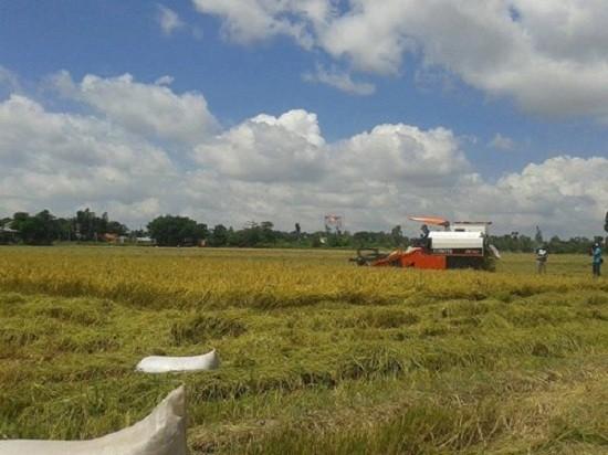 GS Võ Tòng Xuân bày cách làm giàu trên cánh đồng ngập mặn - ảnh 1