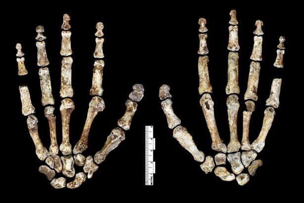 Khám phá bí ẩn về chủng người lùn qua hộp sọ 3 triệu năm - ảnh 2