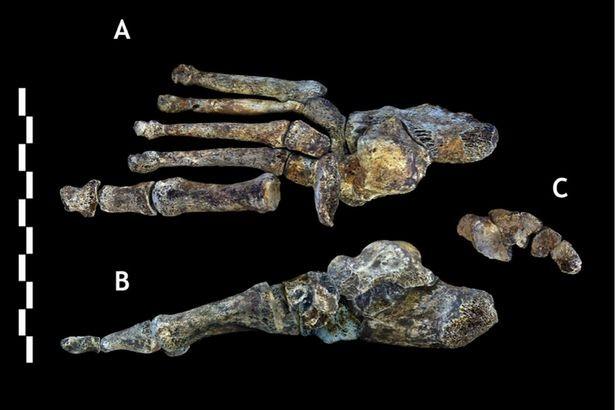 Khám phá bí ẩn về chủng người lùn qua hộp sọ 3 triệu năm - ảnh 3