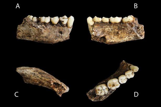 Khám phá bí ẩn về chủng người lùn qua hộp sọ 3 triệu năm - ảnh 4