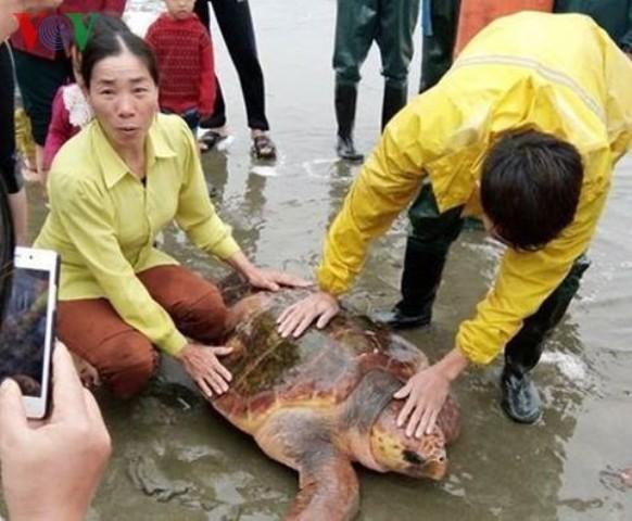 Từ chối lời đề nghị 300 triệu, ngư dân thả rùa quý về với biển - ảnh 1