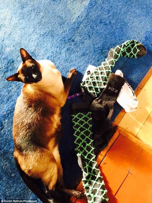 Mèo 'biến thái' bị bắt quả tang trộm đồ lót và tất đàn ông - ảnh 3