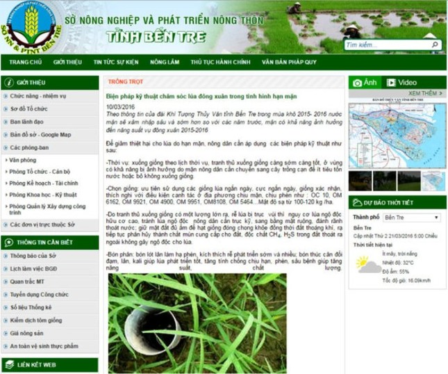Lúa chết gần hết, web Sở mới hướng dẫn cách chăm sóc - ảnh 1