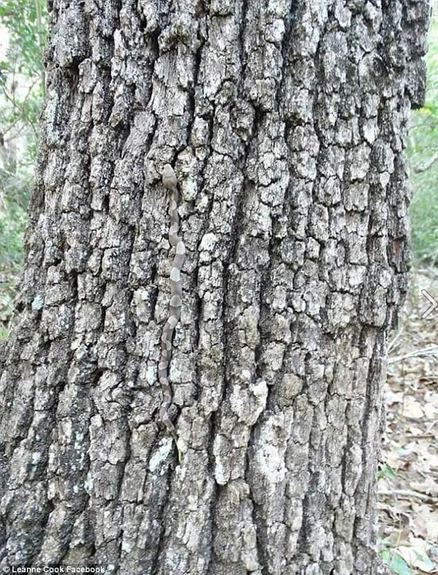 Bạn có nhìn ra một sinh vật cực độc lẩn trốn trong bức ảnh này? - ảnh 1