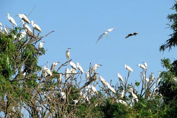 Những hòn đảo đẹp mang tên loài vật ở Việt Nam - ảnh 1