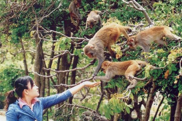Những hòn đảo đẹp mang tên loài vật ở Việt Nam - ảnh 3