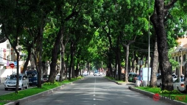TP.HCM: Quyết định đốn hạ 300 cây xanh trên đường Tôn Đức Thắng - ảnh 1
