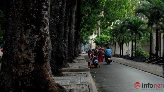 TP.HCM: Quyết định đốn hạ 300 cây xanh trên đường Tôn Đức Thắng - ảnh 2
