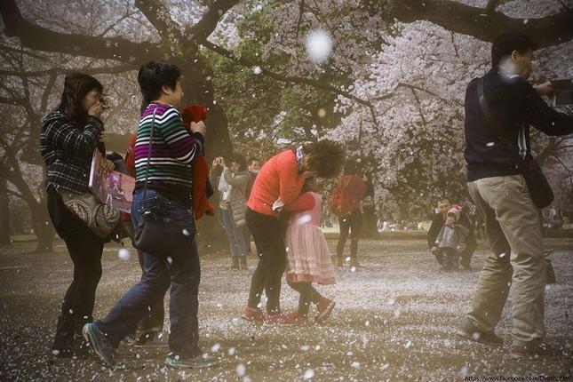 Những bức ảnh kiệt tác hoa anh đào trên tạp chí Nation Geographic - ảnh 13