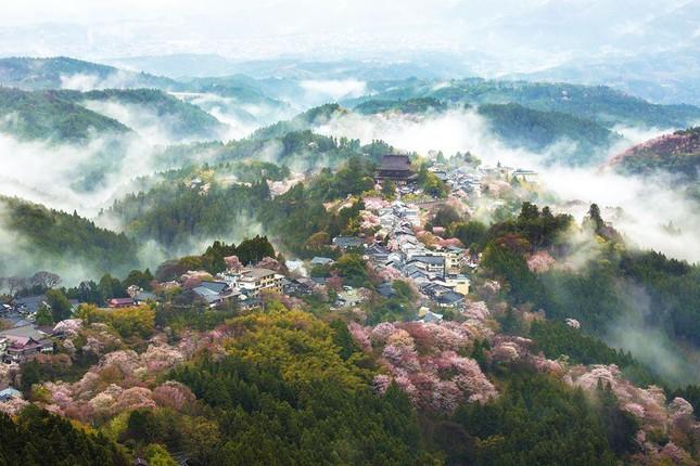 Những bức ảnh kiệt tác hoa anh đào trên tạp chí Nation Geographic - ảnh 8