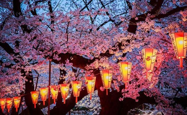 Những bức ảnh kiệt tác hoa anh đào trên tạp chí Nation Geographic - ảnh 4