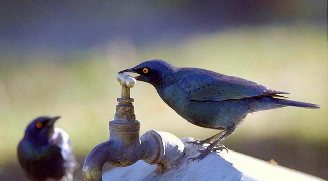 Chim sống ở thành phố thông minh hơn chim ở quê - ảnh 1