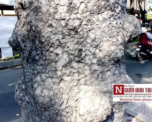 Nuối tiếc ngắm nhìn hàng cây cổ thụ trước giờ di dời ở TP.HCM - ảnh 7
