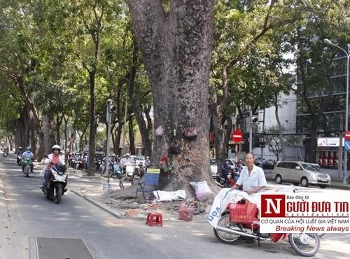 Nuối tiếc ngắm nhìn hàng cây cổ thụ trước giờ di dời ở TP.HCM - ảnh 9