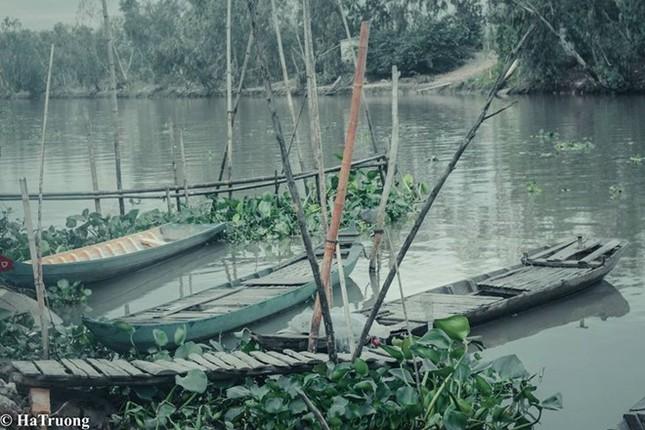 Khám phá rừng tràm Trà Sư đẹp nhất An Giang - ảnh 2