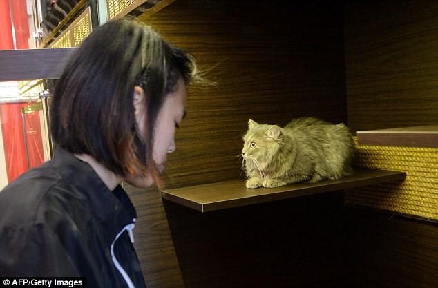 Cuộc sống 'vương giả' của chó, mèo ở khách sạn 5 sao Singapore - ảnh 12