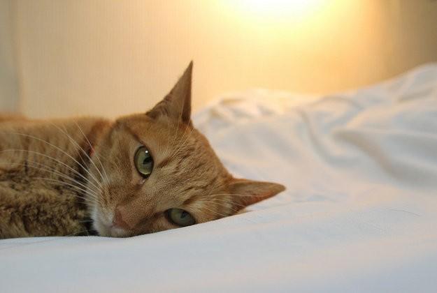 Cuộc sống 'vương giả' của chó, mèo ở khách sạn 5 sao Singapore - ảnh 14
