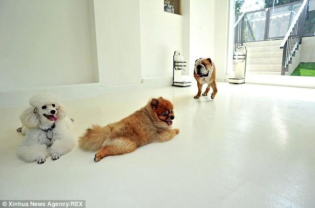 Cuộc sống 'vương giả' của chó, mèo ở khách sạn 5 sao Singapore - ảnh 5