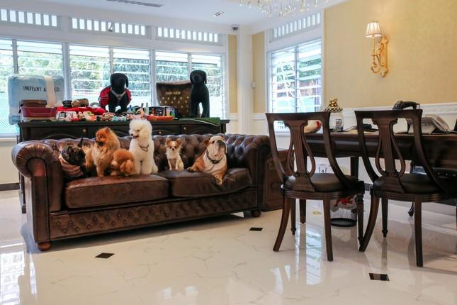 Cuộc sống 'vương giả' của chó, mèo ở khách sạn 5 sao Singapore - ảnh 3
