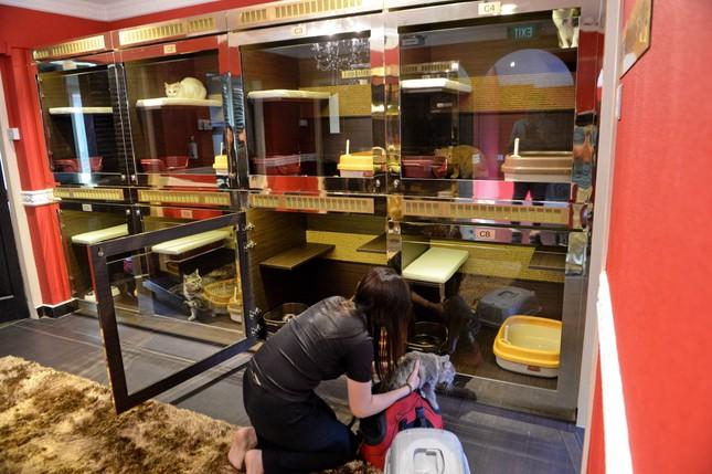 Cuộc sống 'vương giả' của chó, mèo ở khách sạn 5 sao Singapore - ảnh 11