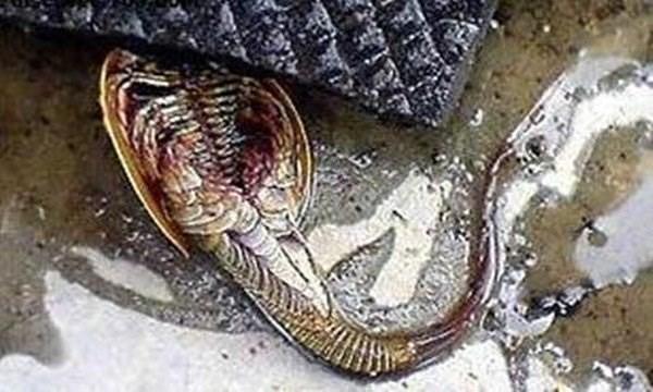 Kinh hãi phát hiện 'thủy quái ngoài hành tinh' 140 chân - ảnh 3