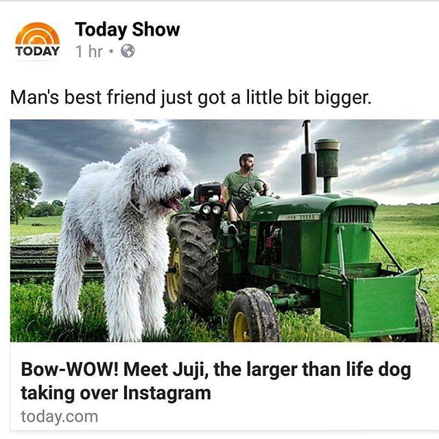 Những con chó khổng lồ đang 'gây bão' trên Instagram - ảnh 5