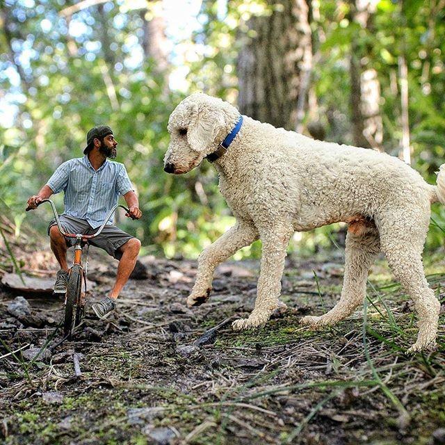 Những con chó khổng lồ đang 'gây bão' trên Instagram - ảnh 11