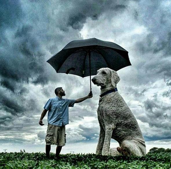 Những con chó khổng lồ đang 'gây bão' trên Instagram - ảnh 4
