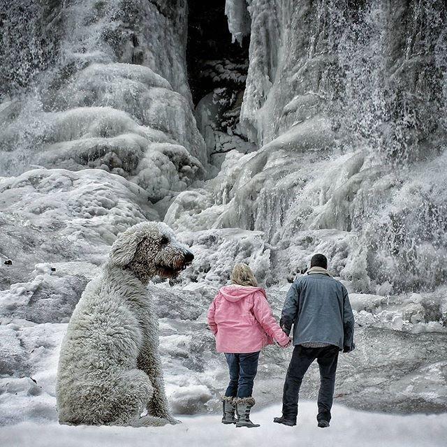 Những con chó khổng lồ đang 'gây bão' trên Instagram - ảnh 8