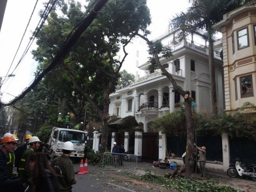Hà Nội: Nhập máy, mời chuyên gia Singapore phục vụ cắt tỉa cây - ảnh 5