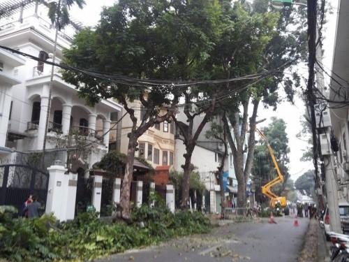 Hà Nội: Nhập máy, mời chuyên gia Singapore phục vụ cắt tỉa cây - ảnh 4