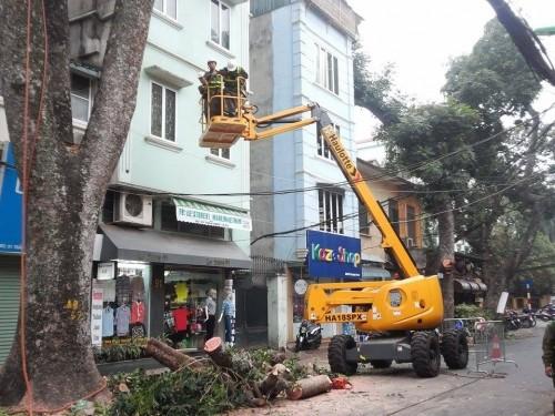 Hà Nội: Nhập máy, mời chuyên gia Singapore phục vụ cắt tỉa cây - ảnh 1