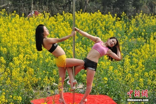 Thiếu nữ Trung Quốc múa cột 'mê đắm' giữa sắc hoa vàng - ảnh 2