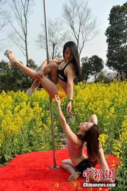 Thiếu nữ Trung Quốc múa cột 'mê đắm' giữa sắc hoa vàng - ảnh 3