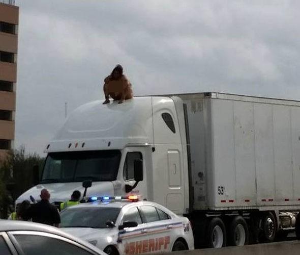 Cô gái 'béo' khỏa thân nhảy múa trên nóc xe tải - ảnh 3